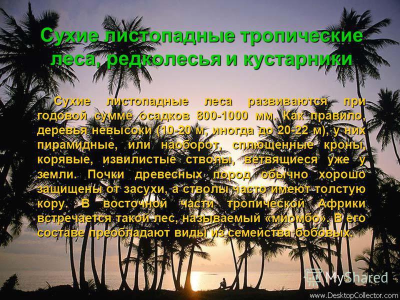 Сухие листопадные тропические леса, редколесья и кустарники Сухие листопадные леса развиваются при годовой сумме осадков 800-1000 мм. Как правило, деревья невысоки (10-20 м, иногда до 20-22 м), у них пирамидные, или наоборот, сплющенные кроны, корявы