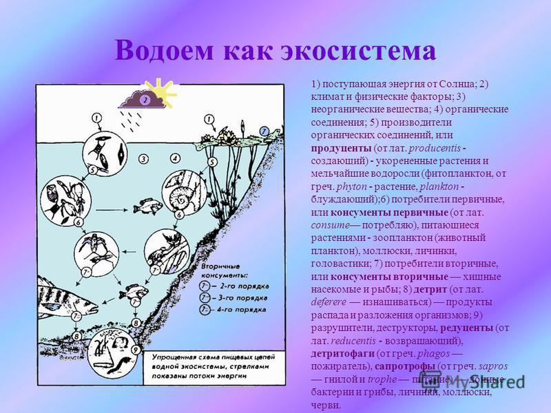 Водоем как экосистема 1) поступающая энергия от Солнца; 2) климат и физические факторы; 3) неорганические вещества; 4) органические соединения; 5) производители органических соединений, или продуценты (от лат. producentis - создающий) - укорененные р