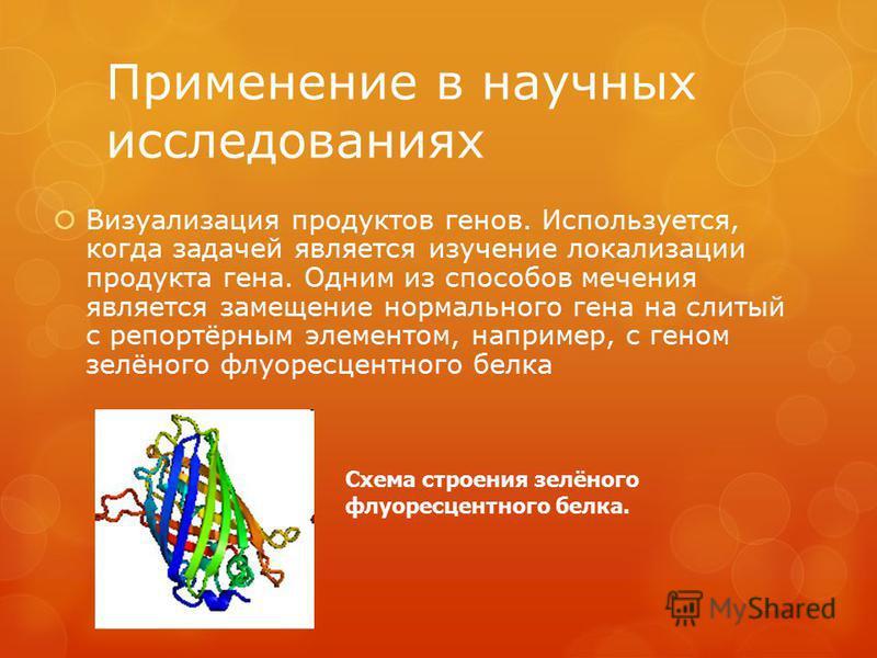 Применение в научных исследованиях Визуализация продуктов генов. Используется, когда задачей является изучение локализации продукта гена. Одним из способов мечения является замещение нормального гена на слитый с репортёрным элементом, например, с ген