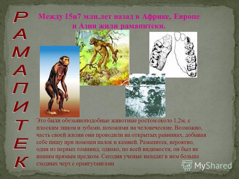 Между 15 и 7 млн.лет назад в Африке, Европе и Азии жили рамапитеки. Это были обезьянойподобные животные ростом около 1,2 м, с плоским лицом и зубами, похожими на человеческие. Возможно, часть своей жизни они проводили на открытых равнинах, добывая се