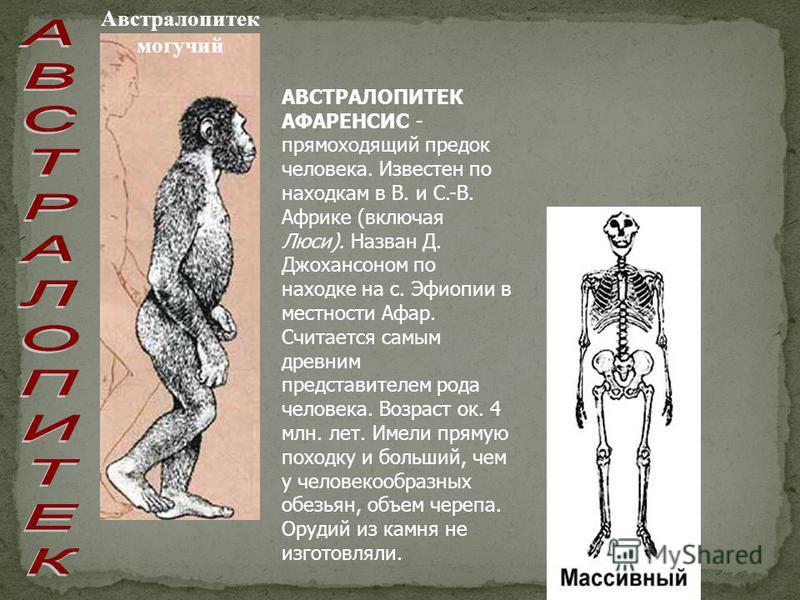 Австралопитек могучий АВСТРАЛОПИТЕК АФАРЕНСИС - прямоходящий предок человека. Известен по находкам в В. и С.-В. Африке (включая Люси). Назван Д. Джохансоном по находке на с. Эфиопии в местности Афар. Считается самым древним представителем рода челове