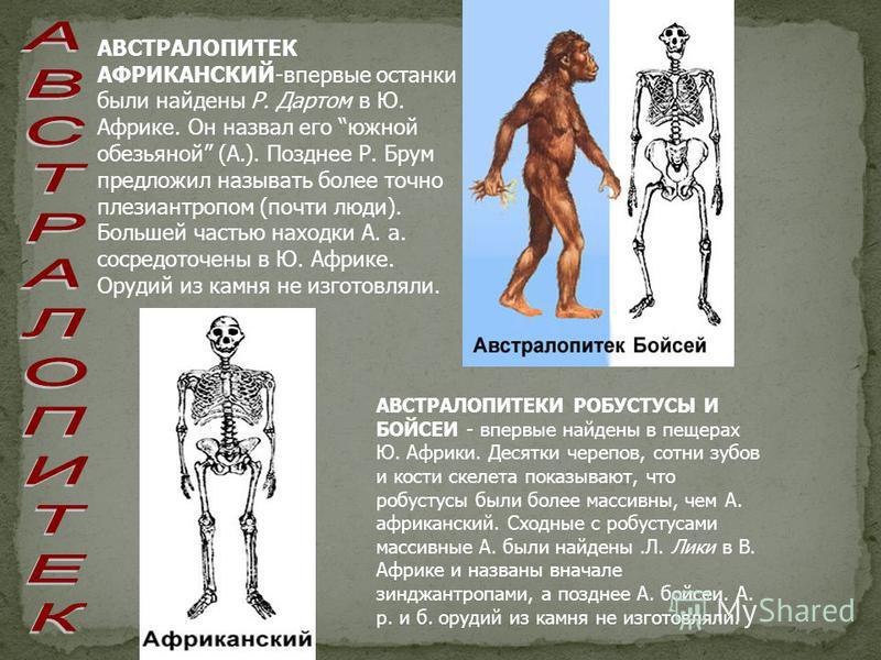 АВСТРАЛОПИТЕК АФРИКАНСКИЙ-впервые останки были найдены Р. Дартом в Ю. Африке. Он назвал его южной обезьянойй (А.). Позднее Р. Брум предложил называть более точно плезиантропом (почти люди). Большей частью находки А. а. сосредоточены в Ю. Африке. Оруд