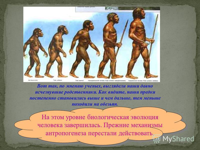 Вот так, по мнению ученых, выглядели наши давно исчезнувшие родственники. Как видите, наши предки постепенно становились выше и чем дальше, тем меньше походили на обезьян. На этом уровне биологическая эволюция человека завершилась. Прежние механизмы