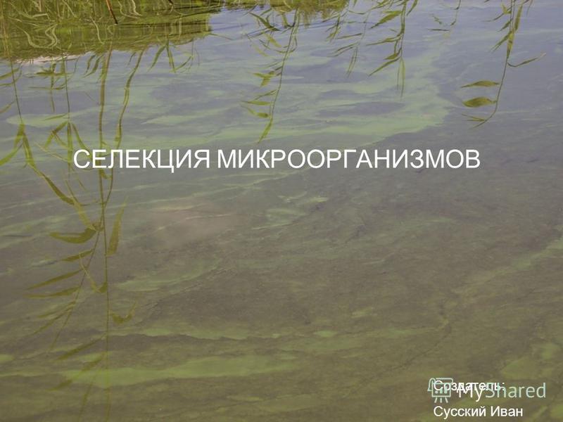 СЕЛЕКЦИЯ МИКРООРГАНИЗМОВ Создатель: Сусский Иван
