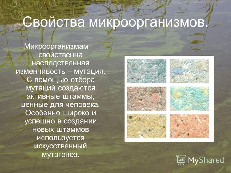 Свойства микроорганизмов. Микроорганизмам свойственна наследственная изменчивость – мутация. С помощью отбора мутаций создаются активные штаммы, ценные для человека. Особенно широко и успешно в создании новых штаммов используется искусственный мутаге