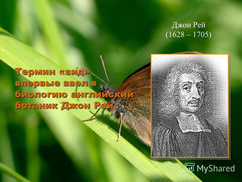 Термин «вид» впервые ввел в биологию английский ботаник Джон Рей. Джон Рей (1628 – 1705)