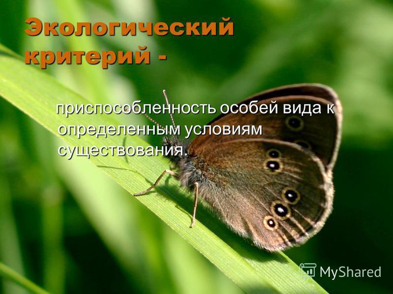 Экологический критерий - приспособленность особей вида к определенным условиям существования. приспособленность особей вида к определенным условиям существования.