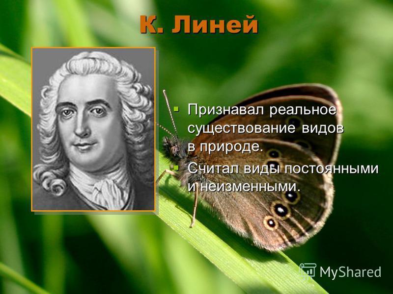 К. Линей Признавал реальное существование видов в природе. Признавал реальное существование видов в природе. Считал виды постоянными и неизменными. Считал виды постоянными и неизменными.