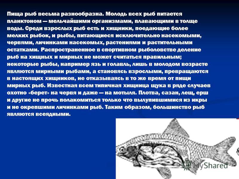 Пища рыб весьма разнообразна. Молодь всех рыб питается планктоном мельчайшими организмами, плавающими в толще воды. Среди взрослых рыб есть и хищники, поедающие более мелких рыбок, и рыбы, питающиеся исключительно насекомыми, червями, личинками насек