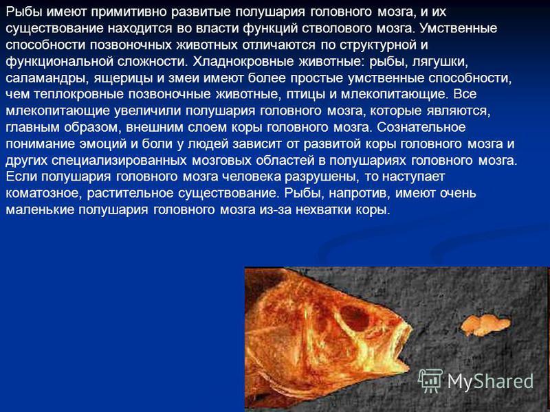 Рыбы имеют примитивно развитые полушария головного мозга, и их существование находится во власти функций стволового мозга. Умственные способности позвоночных животных отличаются по структурной и функциональной сложности. Хладнокровные животные: рыбы,
