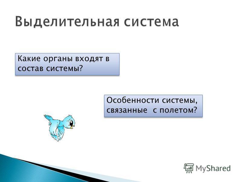 Особенности системы, связанные с полетом? Какие органы входят в состав системы?