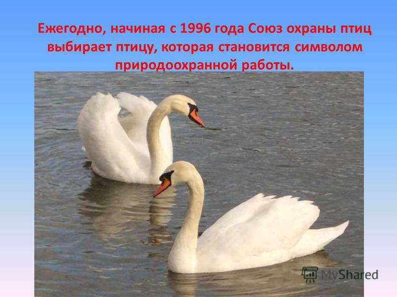 Ежегодно, начиная с 1996 года Союз охраны птиц выбирает птицу, которая становится символом природоохранной работы.