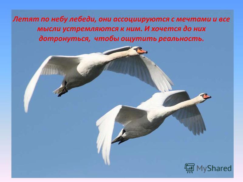 Летят по небу лебеди, они ассоциируются с мечтами и все мысли устремляются к ним. И хочется до них дотронуться, чтобы ощутить реальность.