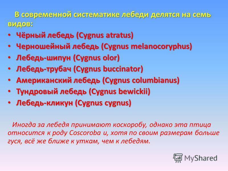 В современной систематике лебеди делятся на семь видов: Чёрный лебедь (Cygnus atratus) Чёрный лебедь (Cygnus atratus) Черношейный лебедь (Cygnus melanocoryphus) Черношейный лебедь (Cygnus melanocoryphus) Лебедь-шипун (Cygnus olor) Лебедь-шипун (Cygnu