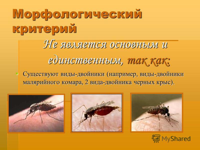 Морфологический критерий Не является основным и единственным, так как: Существуют виды-двойники (например, виды-двойники малярийного комара, 2 вида-двойника черных крыс).