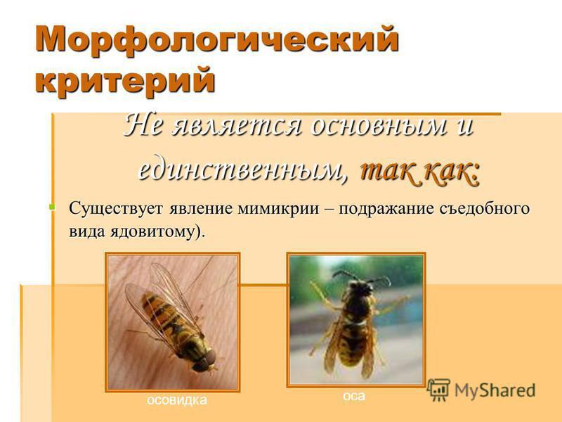 Не является основным и единственным, так как: Существует явление мимикрии – подражание съедобного вида ядовитому). осовидка оса