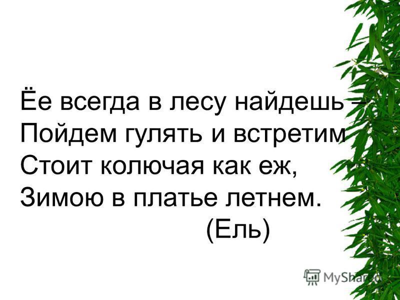 Ёе всегда в лесу найдешь – Пойдем гулять и встретим Стоит колючая как еж, Зимою в платье летнем. (Ель)