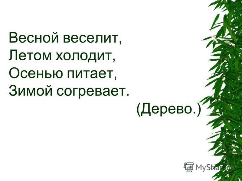 Весной веселит, Летом холодит, Осенью питает, Зимой согревает. (Дерево.)