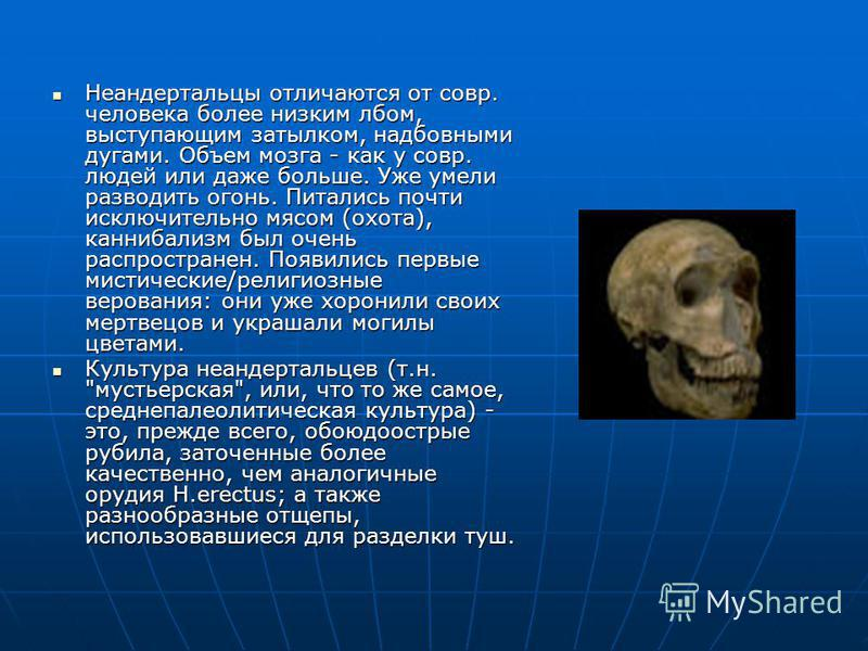 Неандертальцы отличаются от совр. человека более низким лбом, выступающим затылком, надбовными дугами. Объем мозга - как у совр. людей или даже больше. Уже умели разводить огонь. Питались почти исключительно мясом (охота), каннибализм был очень распр