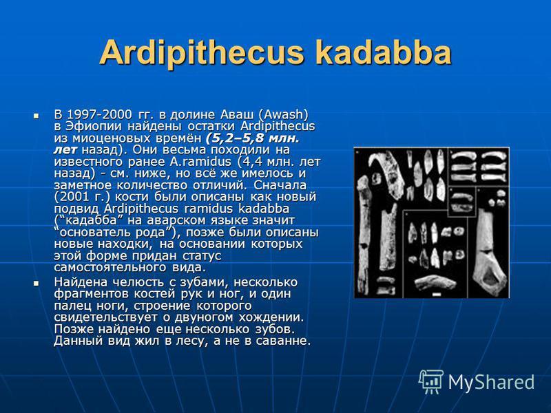Ardipithecus kadabba В 1997-2000 гг. в долине Аваш (Awash) в Эфиопии найдены остатки Ardipithecus из миоценовых времён (5,2–5,8 млн. лет назад). Они весьма походили на известного ранее A.ramidus (4,4 млн. лет назад) - см. ниже, но всё же имелось и за