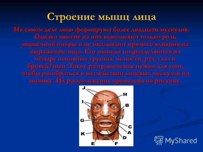 Строение мышц лица На самом деле лицо формируют более двадцати мускулов. Однако многие из них выполняют только роль мышечной опоры и не оказывают прямого влияния на выражение лица. Его мышцы подразделяются на четыре основные группы: челюсти, рта, гла