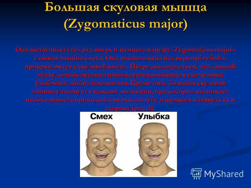 Большая скуловая мышца (Zygomaticus major) Она вытягивает угол рта вверх и немного наружу. Zygomaticus major - главная мышца смеха. Она расположена над верхней губой и прикрепляется к скуловой кости. Нетрудно догадаться, что данный мускул очень актив