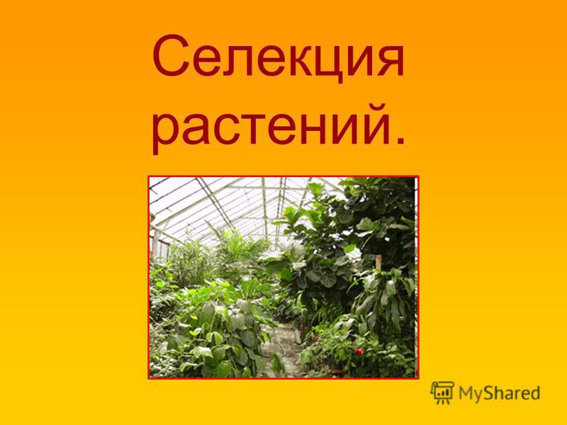Селекция растений.