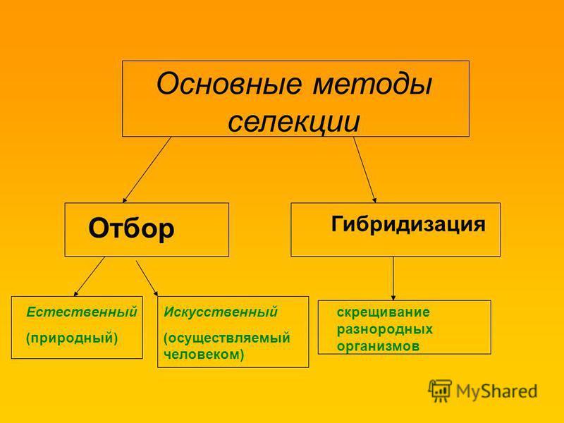 Основные методы селекции Отбор Гибридизация Естественный (природный) Искусственный (осуществляемый человеком) скрещивание разнородных организмов