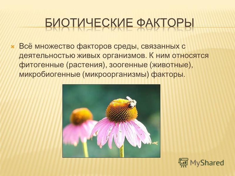Всё множество факторов среды, связанных с деятельностью живых организмов. К ним относятся фитогенные (растения), зоогенные (животные), микробиогенные (микроорганизмы) факторы.