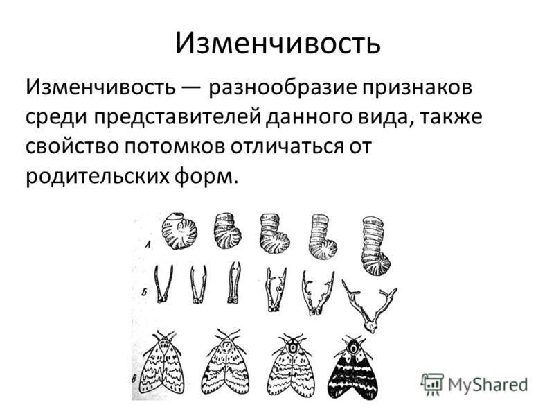 Изменчивость Изменчивость разнообразие признаков среди представителей данного вида, также свойство потомков отличаться от родительских форм.