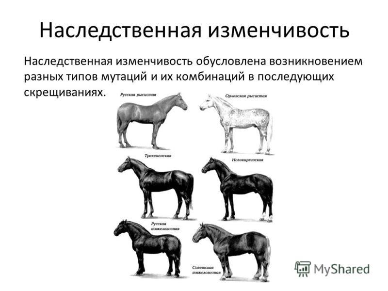 Наследственная изменчивость Наследственная изменчивость обусловлена возникновением разных типов мутаций и их комбинаций в последующих скрещиваниях.