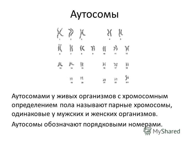 Аутосомы Аутосомами у живых организмов с хромосомным определением пола называют парные хромосомы, одинаковые у мужских и женских организмов. Аутосомы обозначают порядковыми номерами.
