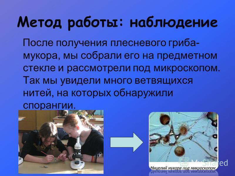 Метод работы: наблюдение После получения плесневого гриба- мукора, мы собрали его на предметном стекле и рассмотрели под микроскопом. Так мы увидели много ветвящихся нитей, на которых обнаружили спорангии.