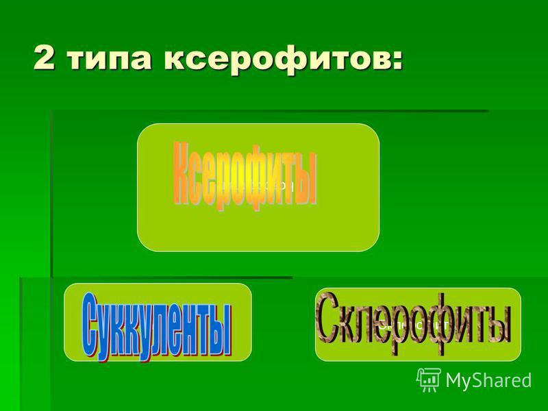 2 типа ксерофитов: Ксерофиты Суккуленты Склерофиты