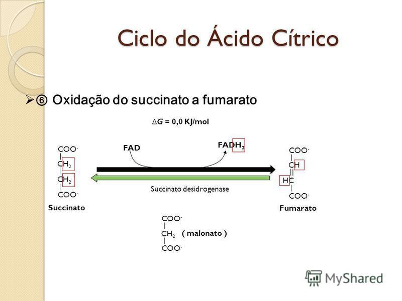 Ciclo do Ácido Cítrico Oxidação do succinato a fumarato COO - CH 2 COO - Succinato Succinato desidrogenase COO - HC CH COO - FAD FADH 2 Δ G = 0,0 KJ/mol Fumarato COO - CH 2 COO - ( malonato )