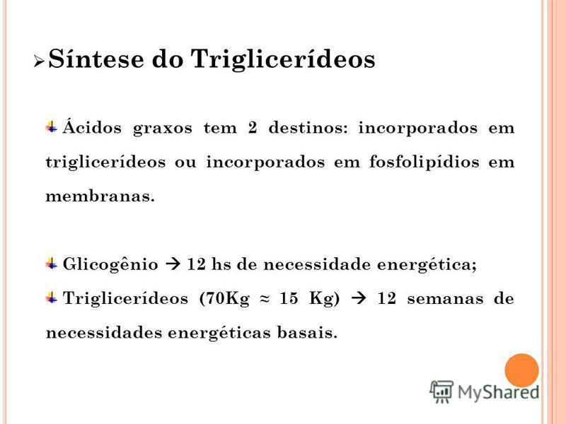 Síntese do Triglicerídeos Ácidos graxos tem 2 destinos: incorporados em triglicerídeos ou incorporados em fosfolipídios em membranas. Glicogênio 12 hs de necessidade energética; Triglicerídeos (70Kg 15 Kg) 12 semanas de necessidades energéticas basai