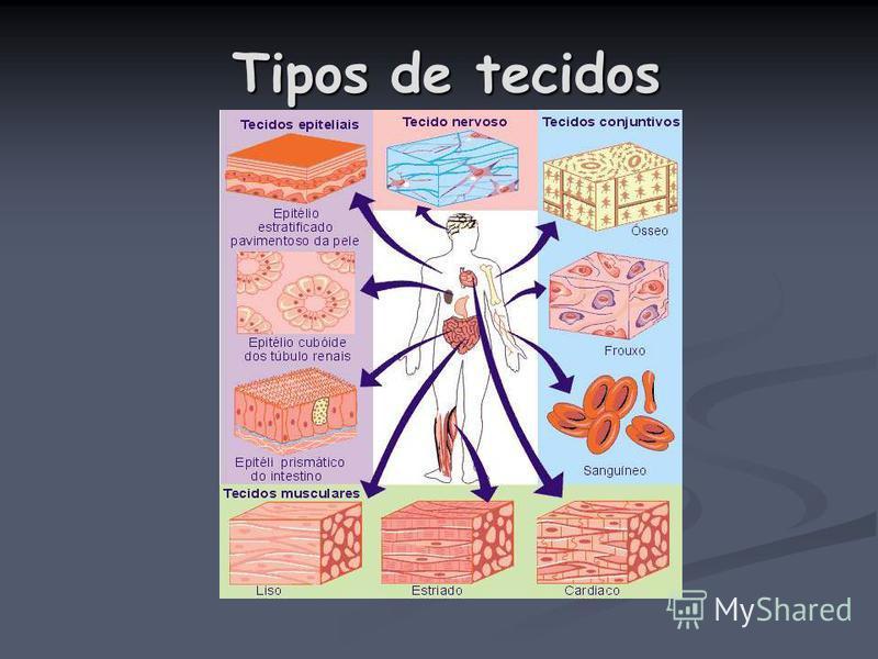 Tipos de tecidos