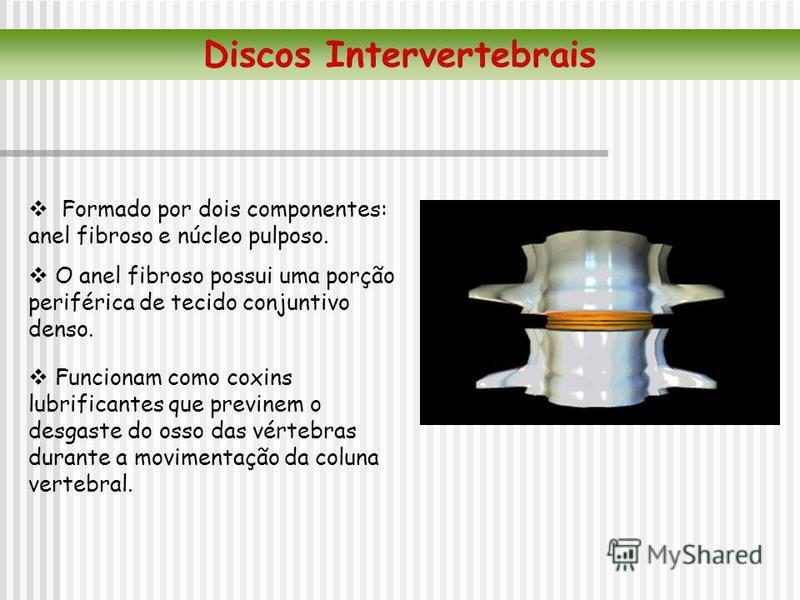 Formado por dois componentes: anel fibroso e núcleo pulposo. O anel fibroso possui uma porção periférica de tecido conjuntivo denso. Discos Intervertebrais Funcionam como coxins lubrificantes que previnem o desgaste do osso das vértebras durante a mo