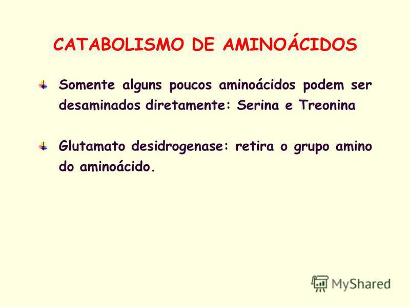Somente alguns poucos aminoácidos podem ser desaminados diretamente: Serina e Treonina Glutamato desidrogenase: retira o grupo amino do aminoácido. CATABOLISMO DE AMINOÁCIDOS