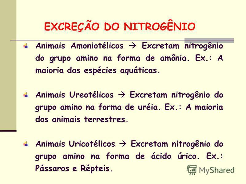 Animais Amoniotélicos Excretam nitrogênio do grupo amino na forma de amônia. Ex.: A maioria das espécies aquáticas. Animais Ureotélicos Excretam nitrogênio do grupo amino na forma de uréia. Ex.: A maioria dos animais terrestres. Animais Uricotélicos
