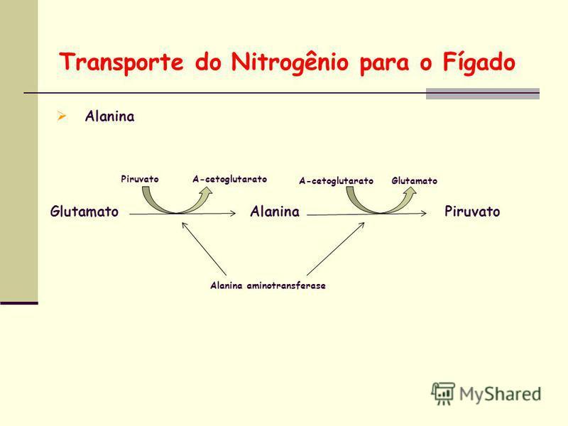 Transporte do Nitrogênio para o Fígado Alanina GlutamatoAlaninaPiruvato Alanina aminotransferase Piruvato Α-cetoglutarato Glutamato
