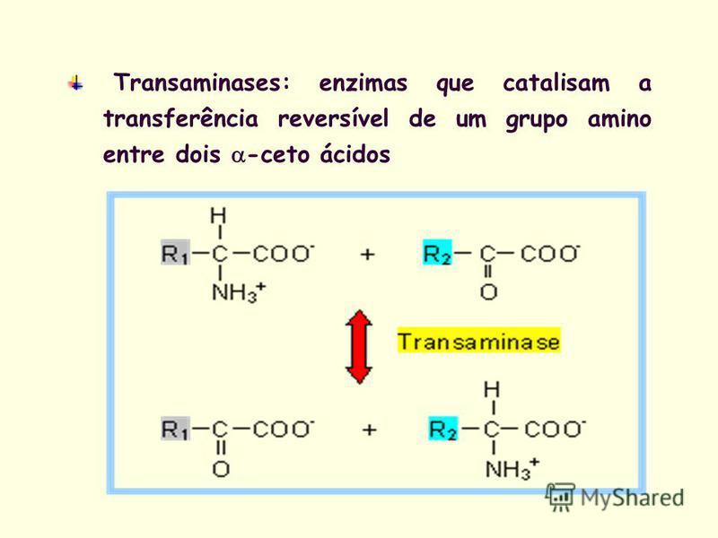 Transaminases: enzimas que catalisam a transferência reversível de um grupo amino entre dois -ceto ácidos