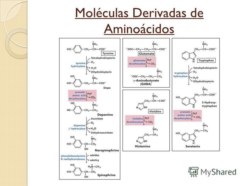 Moléculas Derivadas de Aminoácidos