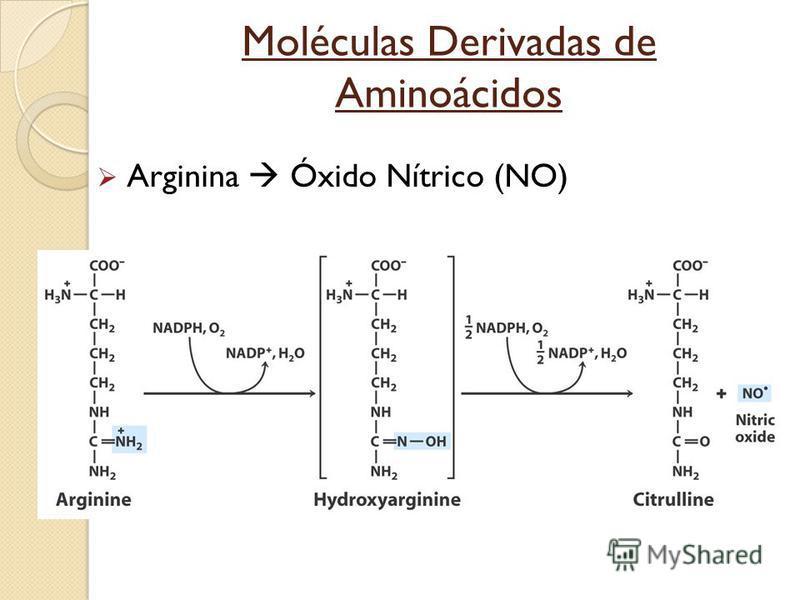 Arginina Óxido Nítrico (NO)