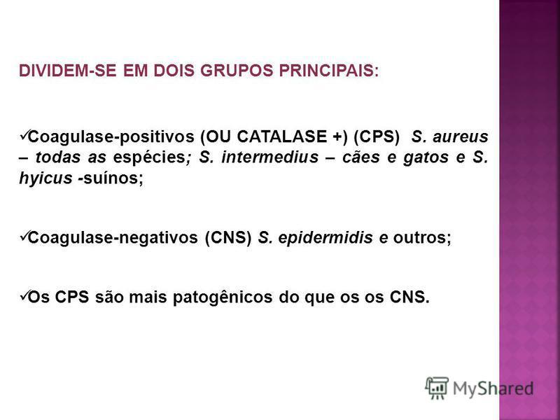DIVIDEM-SE EM DOIS GRUPOS PRINCIPAIS: Coagulase-positivos (OU CATALASE +) (CPS) S. aureus – todas as espécies; S. intermedius – cães e gatos e S. hyicus -suínos; Coagulase-negativos (CNS) S. epidermidis e outros; Os CPS são mais patogênicos do que os