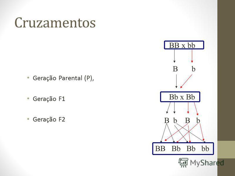 Cruzamentos Geração Parental (P), Geração F1 Geração F2 BB x bb B b Bb x Bb B b BB Bb Bb bb