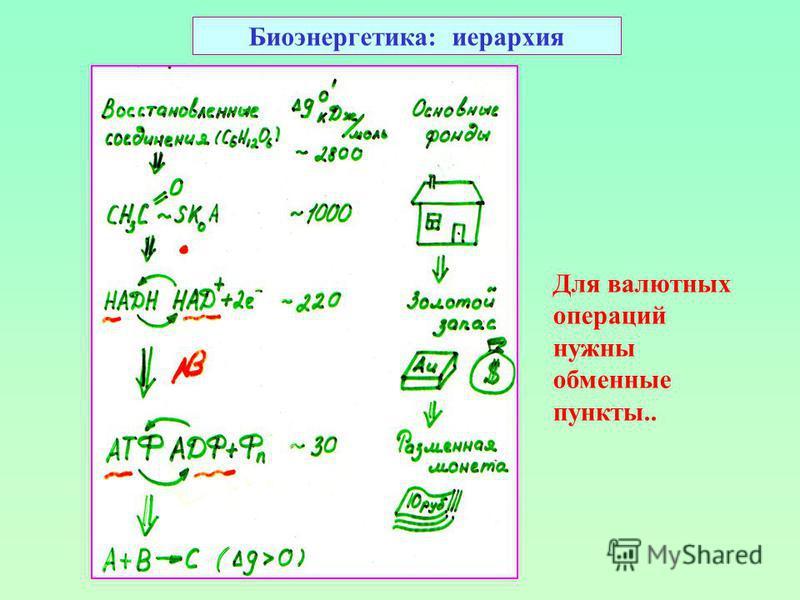 Биоэнергетика: иерархия Для валютных операций нужны обменные пункты..