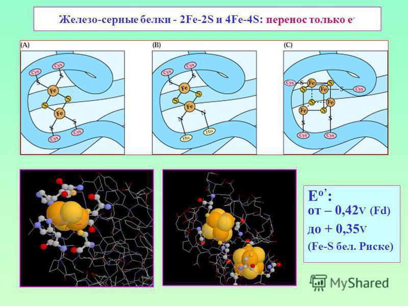 Железо-серные белки - 2Fe-2S и 4Fe-4S : перенос только е - E о : от – 0,42 V (Fd) до + 0,35 V (Fe-S бел. Риске)