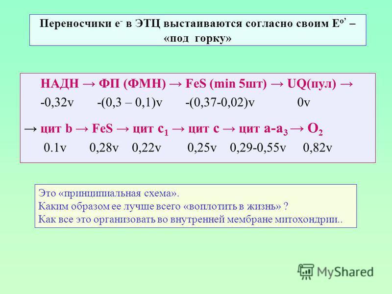 Переносчики е - в ЭТЦ выстаиваются согласно своим Е о – «под горку» НАДН ФП (ФМН) FeS (min 5 шт) UQ(пул) -0,32v -(0,3 – 0,1)v -(0,37-0,02)v 0v цит b FeS цит с 1 цит с цит а-а 3 О 2 0.1v 0,28v 0,22v 0,25v 0,29-0,55v 0,82v Это «принципиальная схема». К