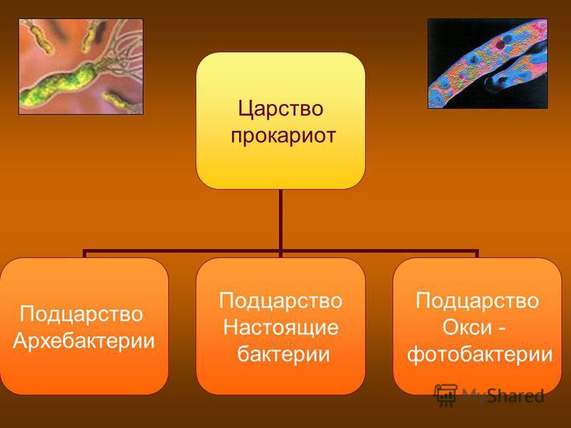 Царство прокариот Подцарство Архебактерии Подцарство Настоящие бактерии Подцарство Окси - фотобактерии